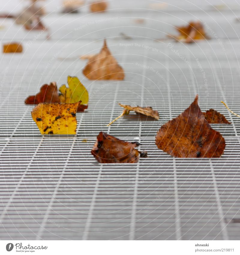 Nature Leaf Autumn Brown Metal Environment Lie To fall Transience Decline Grating Autumn leaves Autumnal Autumnal colours Autumn wind Metal grid