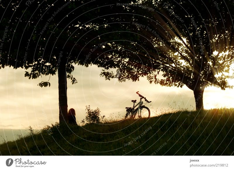 during 1 Human being Nature Landscape Sky Sunrise Sunset Sunlight Summer Beautiful weather Tree Hill Bicycle Looking Warmth Yellow Black White Contentment