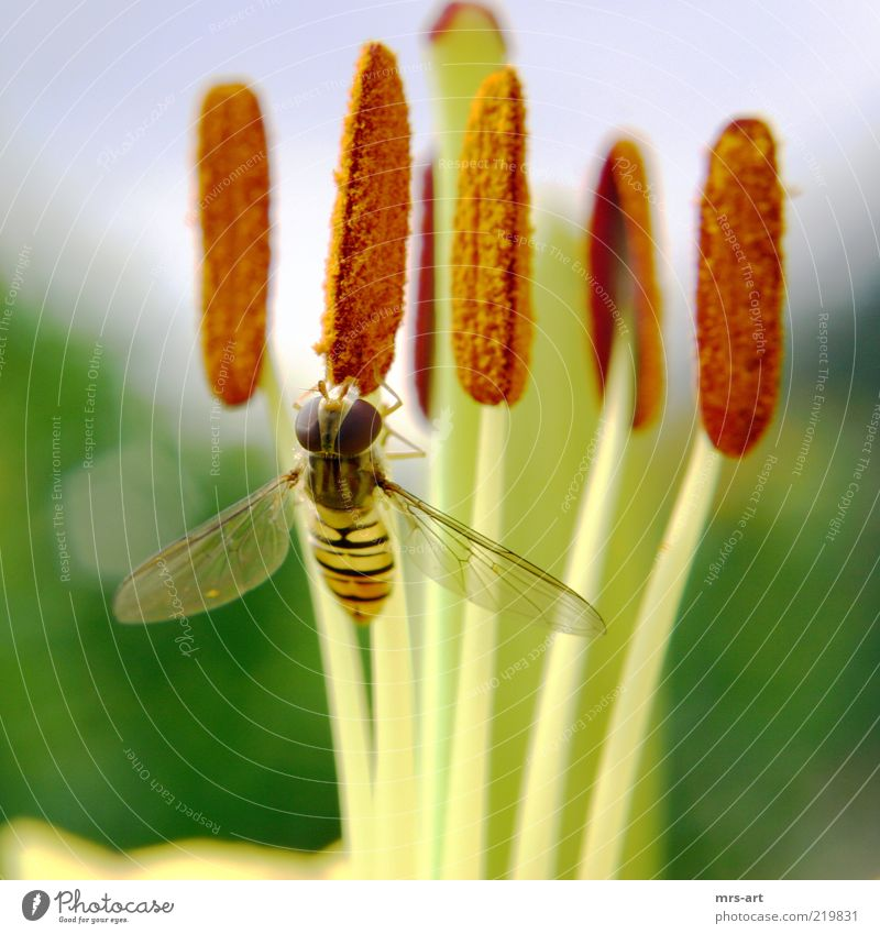 honeymouth Nature Plant Animal Spring Summer Leaf Blossom Foliage plant Fly 1 Colour photo Exterior shot Deserted Day Contrast Central perspective Looking