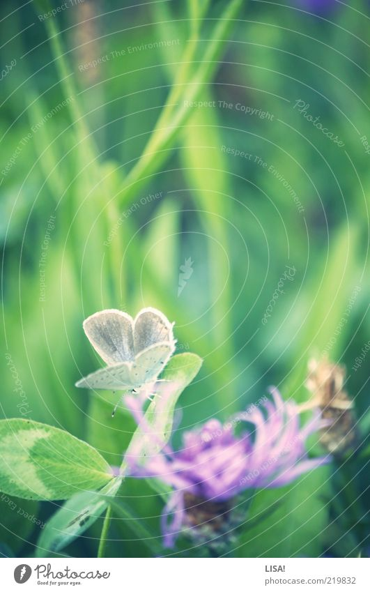 Spring in autumn Nature Plant Grass Leaf Blossom Foliage plant Wild plant Clover blossom Cloverleaf Meadow Animal Wild animal Butterfly Wing 1 Brown Green