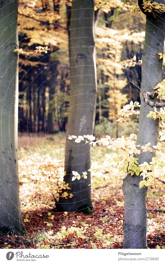Nature Tree Plant Leaf Forest Autumn Landscape Weather Environment Earth Climate Tree trunk Climate change Tree bark Autumn leaves Woodground