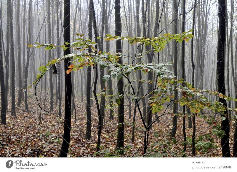 Nature Tree Plant Calm Leaf Forest Dark Autumn Rain Landscape Fog Environment Bushes Many Tree trunk Bleak