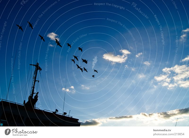 Together towards the sun Environment Nature Air Sky Clouds Horizon Sun Sunrise Sunset Summer Themse Navigation Container ship Animal Wild animal Bird Wing