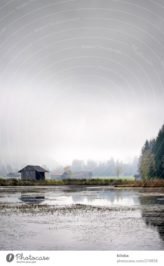 house on the lake Water Clouds Autumn Fog Esthetic Glittering Gray Green Emotions Hope Grief Longing Loneliness steering Lake Nature reserve Switzerland