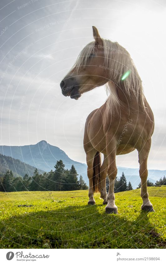 Horse on alpine meadow Ride Mountain Equestrian sports Nature Landscape Sky Sun Beautiful weather Grass Forest 1 Animal Stand Free Strong Blue Brown Gray Calm