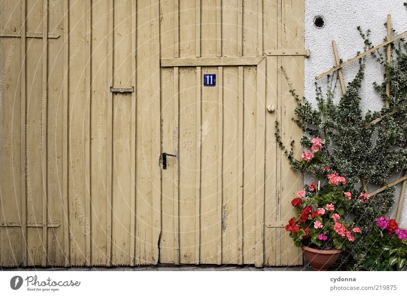 Beautiful Flower Calm Life Wall (building) Wall (barrier) Architecture Door Signs and labeling Closed Lifestyle Esthetic Car door Living or residing Uniqueness