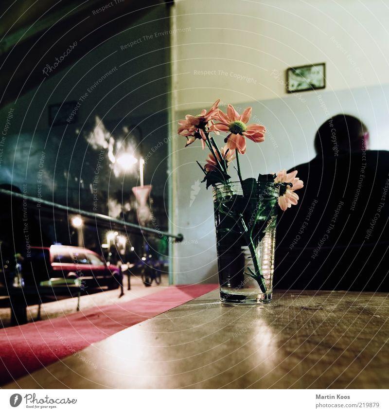 Human being Flower Style Window Head Car Glass Masculine Back Sit Vantage point Decoration Image Café Restaurant Square