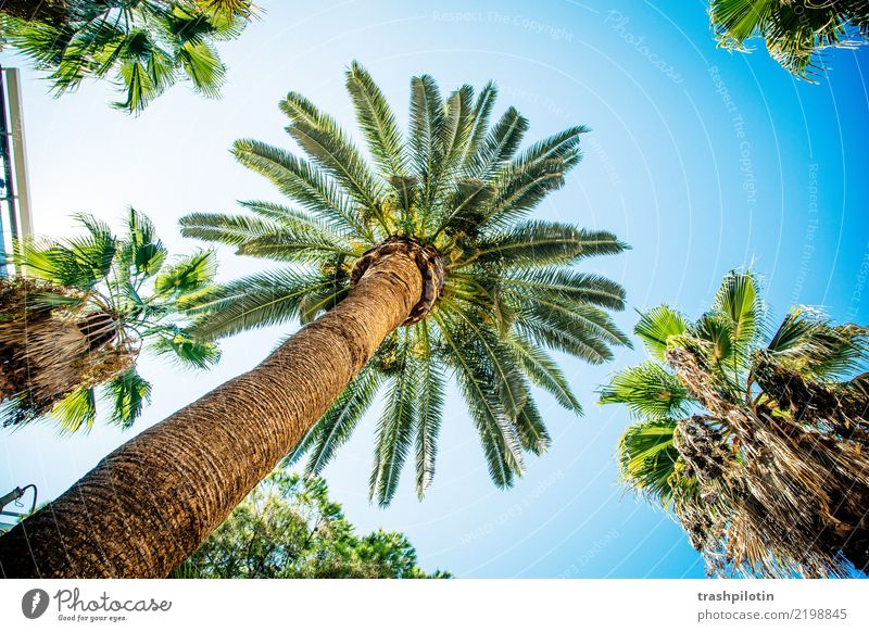 palm Vacation & Travel Tourism Trip Adventure Far-off places Freedom Sightseeing City trip Cruise Summer Summer vacation Sun Plant Tree Wood Blue Green 2017