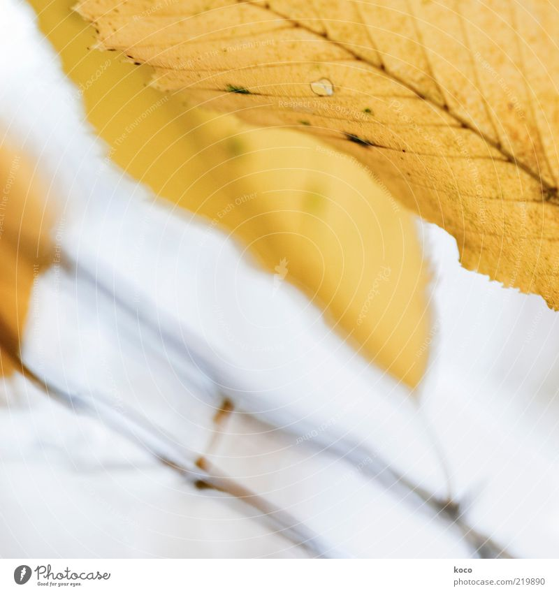 Nature Beautiful Leaf Yellow Autumn Gray Moody Brown Gold Esthetic Growth Transience Exceptional Illuminate Painting and drawing (object) Autumn leaves