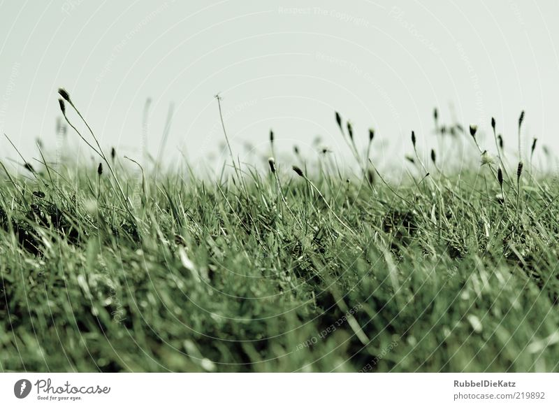 Nature Sky Green Blue Plant Summer Cold Meadow Grass Landscape Environment