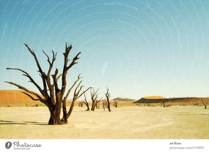 Sky Tree Sand Landscape Horizon Gloomy Travel photography Desert Exceptional Dry Drought Plant To dry up Leafless