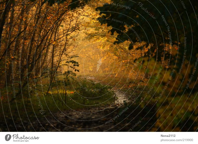 Nature Water Tree Green Plant Leaf Yellow Forest Autumn Grass Lanes & trails Landscape Brown Fog Weather Environment