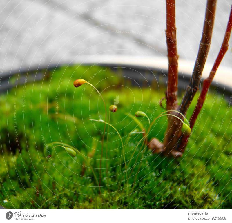 Nature Plant Stalk Moss Foliage plant Plantlet Pot plant