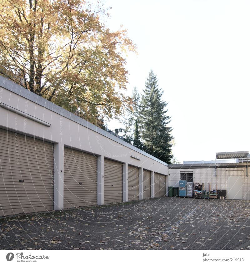 backyard Sky Tree Manmade structures Building Garage door Gloomy Leaf Trash container Courtyard Places Colour photo Subdued colour Exterior shot Deserted