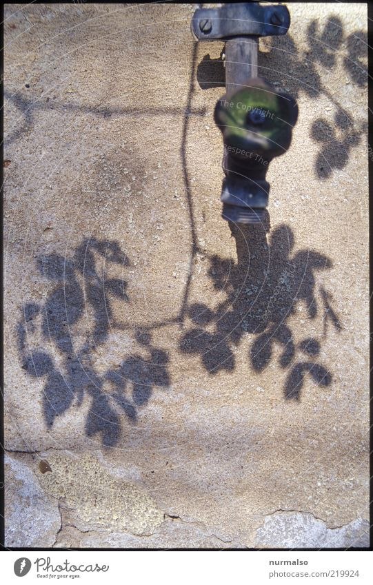 Nature Old Plant Leaf Wall (building) Moody Environment Esthetic Authentic Transience Blossoming Dry Surrealism Twig Shadow Tap
