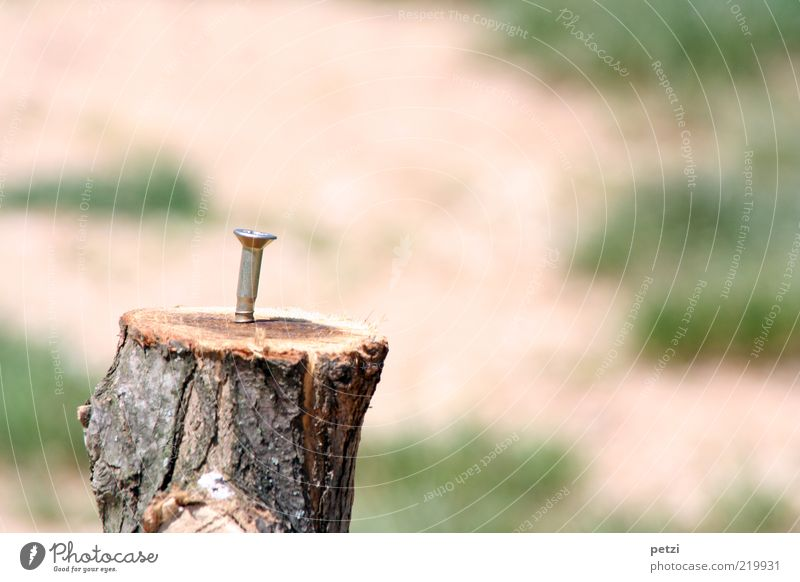 The lonely screw Tree stump Wood Metal Firm Round Brown Green Silver Colour photo Exterior shot Copy Space right Copy Space top Copy Space bottom Day Sunlight