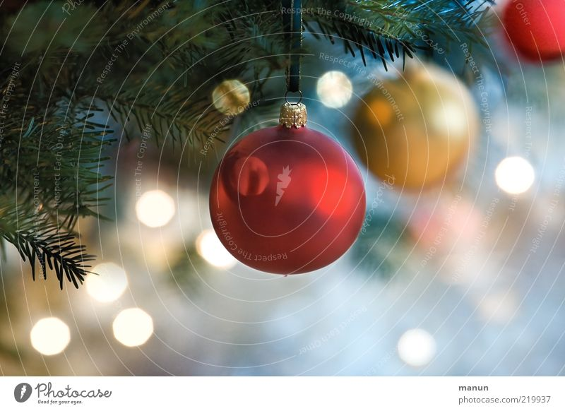 hollow bodies Lifestyle Decoration Feasts & Celebrations Glitter Ball Christianity Christmas decoration Festive Christmas tree Fir needle Glittering Illuminate