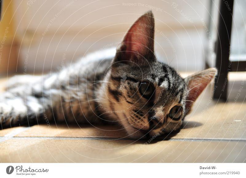 cat Cat already Calm Smooth Ground tranquillity Pet