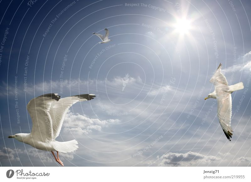 Towards the sun. Sky Clouds Sun Beautiful weather Bird 3 Animal Freedom Seagull Hover Warmth Ease Subdued colour Exterior shot Deserted Copy Space left