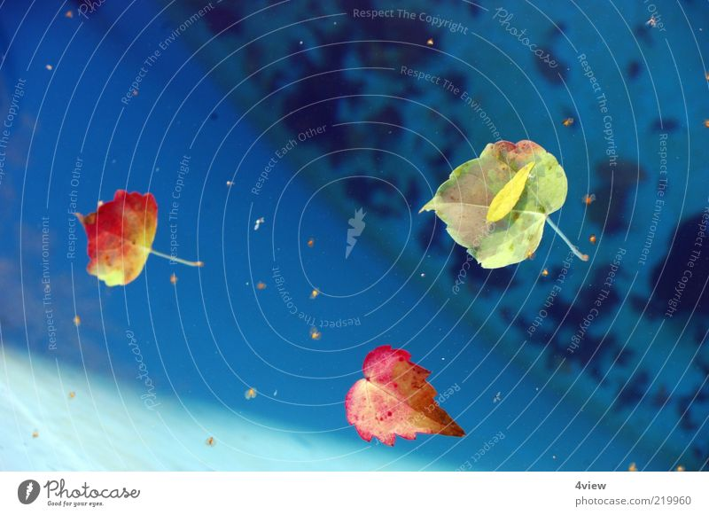 Nature Water Blue Plant Red Leaf Yellow Autumn Orange Environment Beautiful weather Stagnating Autumn leaves Float in the water Surface of water Autumnal colours