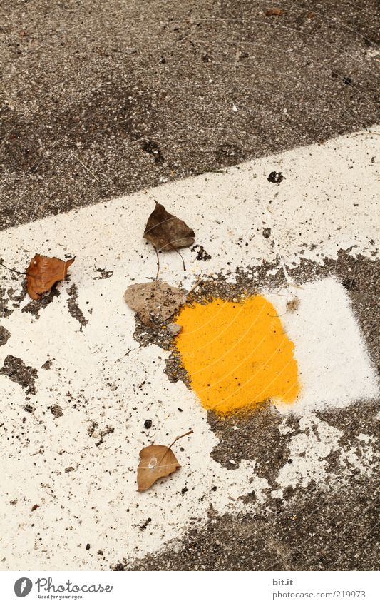 Autumn in Italian flaked Street Lanes & trails Stone Sign Line Stripe Transience Change Autumn leaves Autumnal Dye Geometry Asphalt Corner Square Rectangle