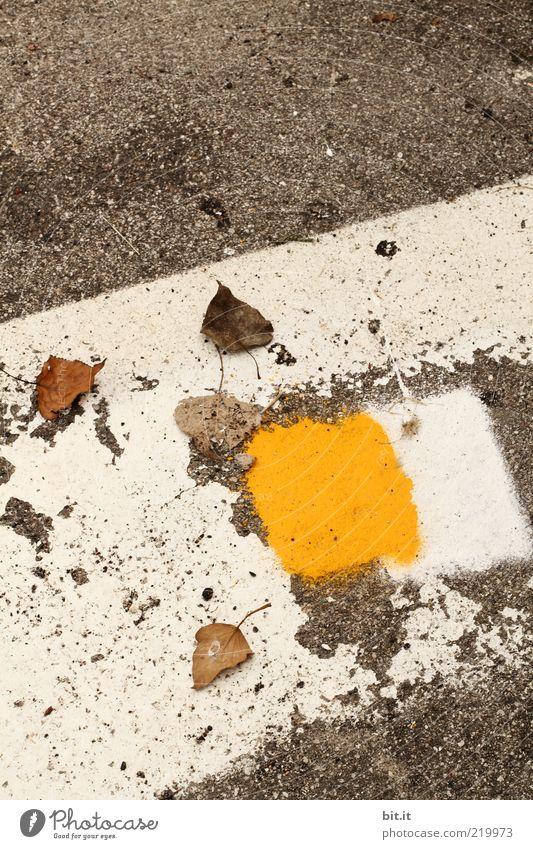 White Summer Leaf Yellow Street Autumn Gray Stone Dye Lanes & trails Line Corner Gloomy Ground Change Lie