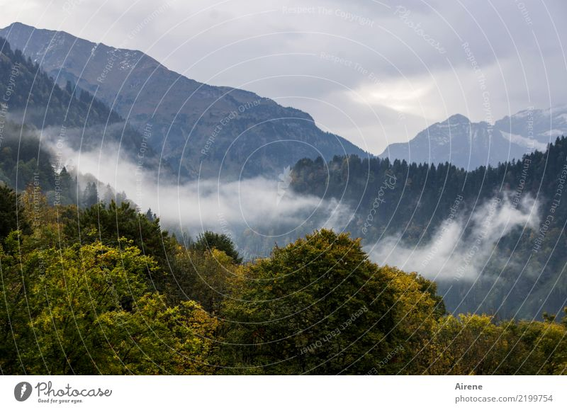 Autumn Hiking I Trip Mountain Landscape Clouds Fog Forest Alps Forest of Bregenz Peak Dark Tall Natural Above Gloomy Blue Green Calm Loneliness Eternity