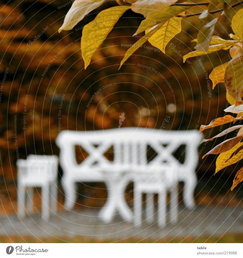 Nature White Tree Plant Calm Relaxation Autumn Style Garden Wood Brown Elegant Lifestyle Esthetic Bushes Change