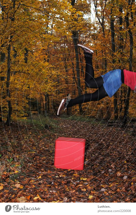 Human being Nature Red Black Yellow Forest Autumn Dice Lanes & trails Feet Legs Flying Gold To fall Exceptional Skirt