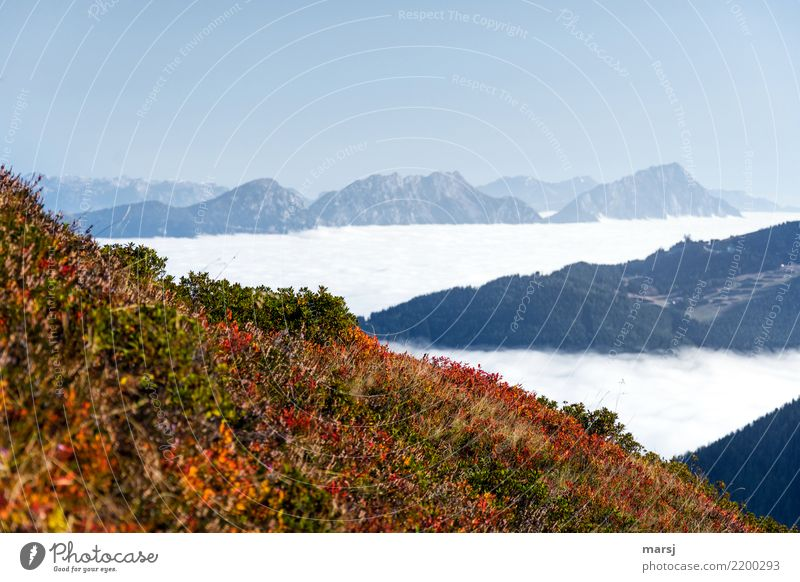 Triangles in the mountains Nature Autumn Beautiful weather Fog Mountain Effort Loneliness Far-off places Sea of fog blueberry bushes Autumnal