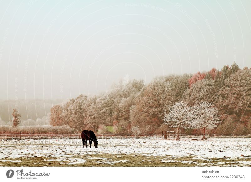 Sky Nature Beautiful Landscape Tree Animal Loneliness Winter Autumn Cold Meadow Snow Grass Snowfall Fog Field
