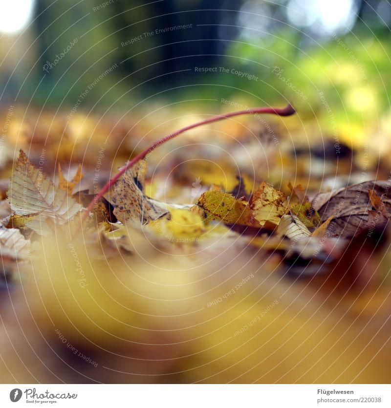 Not another autumn picture ;-( Environment Nature Landscape Plant Autumn Climate Climate change Bad weather Storm Rain Leaf Foliage plant Woodground