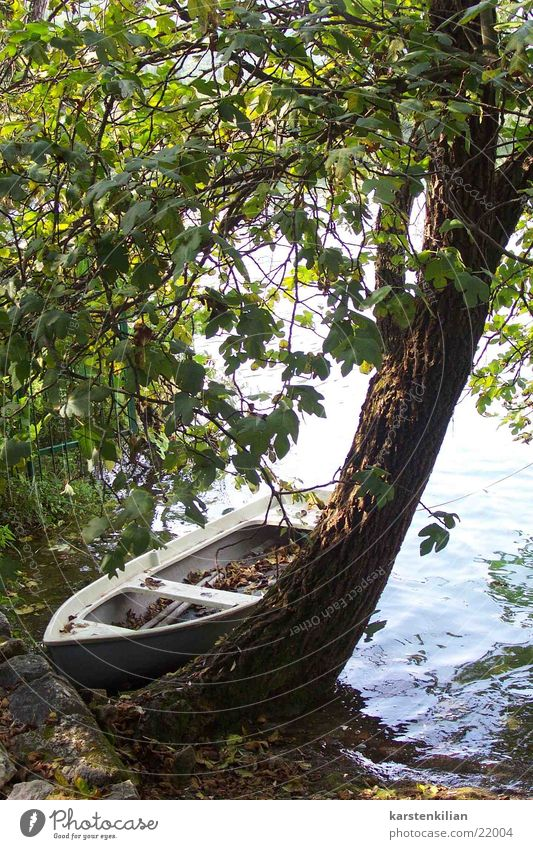 still life Watercraft Tree Tree trunk Ocean Resting place Jetty Calm Romance Motor barge wooden boat Old tethered Coast Escarpment Nature Rowboat
