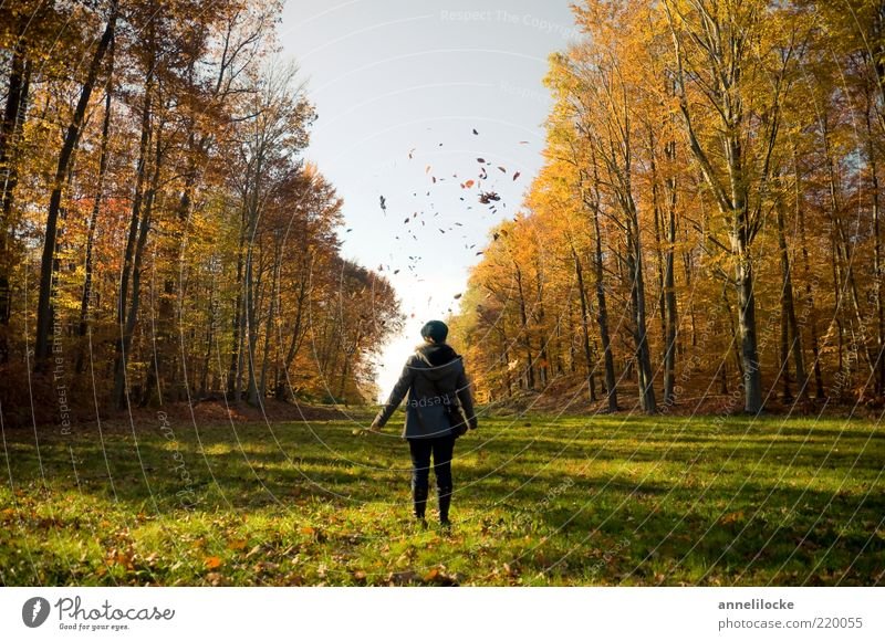 Human being Woman Nature Youth (Young adults) Tree Joy Leaf Adults Forest Environment Landscape Life Meadow Autumn Weather Flying