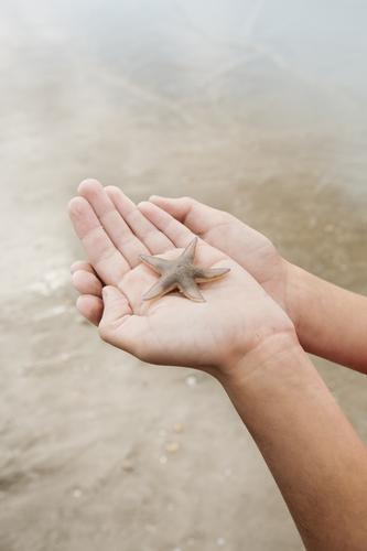 CARE Vacation & Travel Trip Summer Summer vacation Beach Ocean Human being Hand Nature Wild animal Starfish Emotions Safety Protection Love of animals