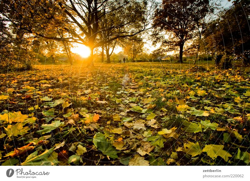 Nature Tree Plant Leaf Loneliness Forest Meadow Autumn Grass Park Landscape Weather Environment Earth Happiness Romance