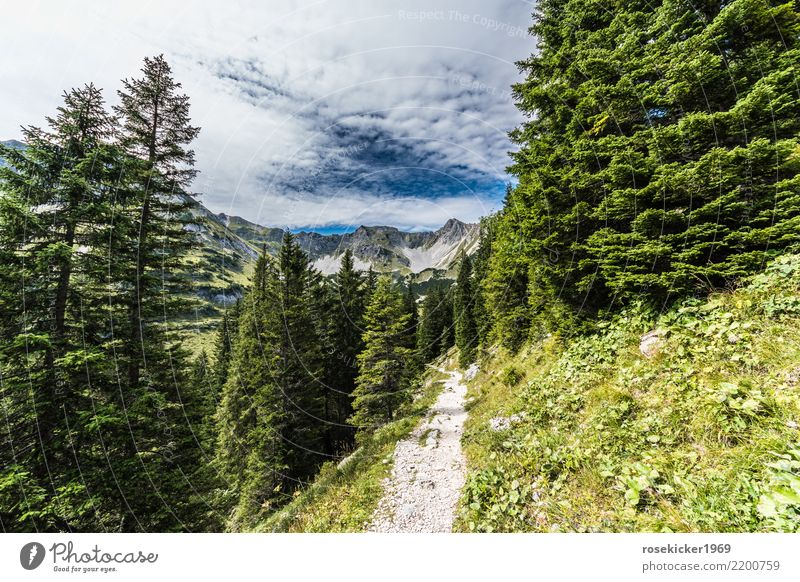 alpine footpath Vacation & Travel Trip Freedom Summer Summer vacation Hiking Nature Landscape Clouds Forest Alps Mountain Peak Lanes & trails Relaxation Fitness