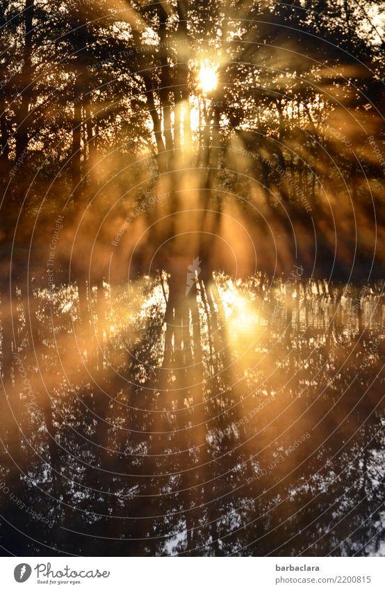 Nature Plant Water Landscape Sun Tree Dark Environment Exceptional Lake Moody Bright Illuminate Gold Power Beginning