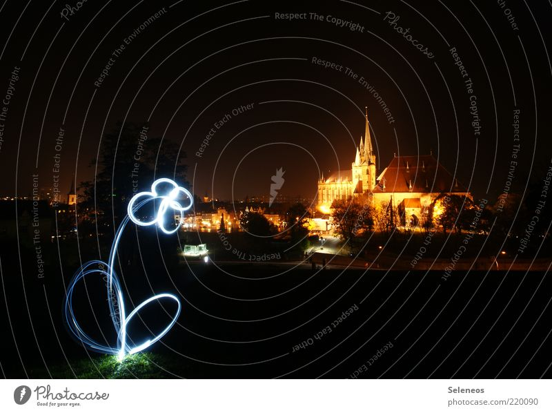 Flower City Church Leisure and hobbies Stripe Blossoming Illuminate Skyline Long exposure Dome Visual spectacle Tourist Attraction Light show Flashlight Erfurt