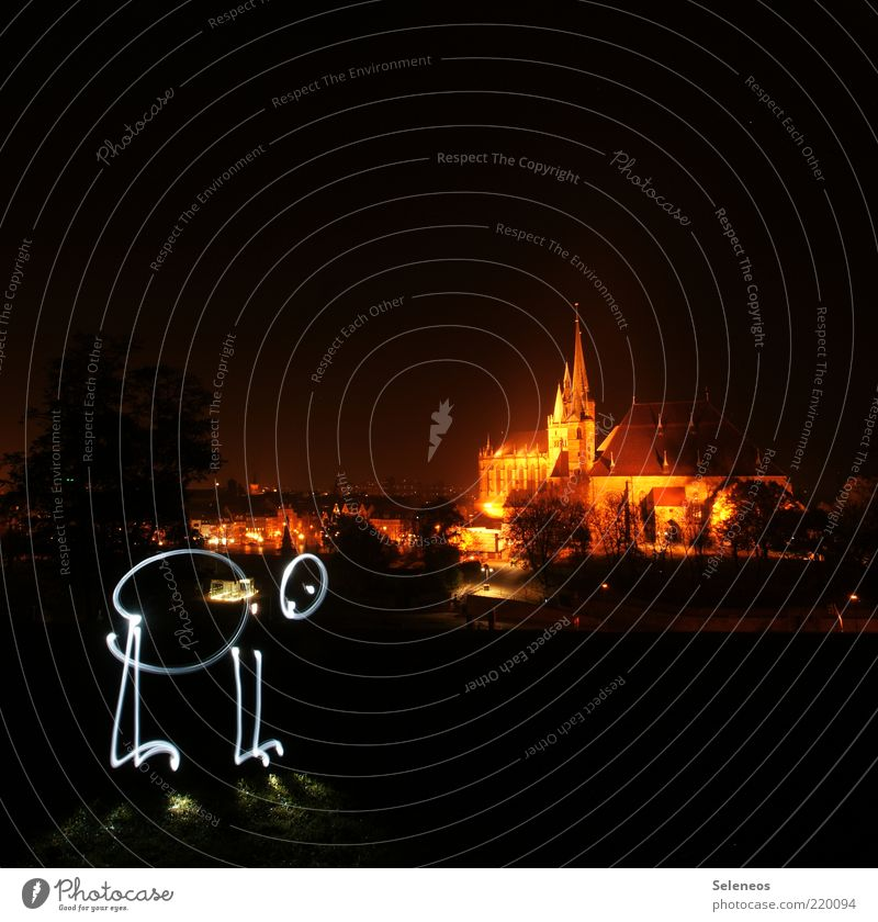 SIGHTSEEING Erfurt Town Old town Skyline Church Dome Tourist Attraction Glittering Illuminate Flare Colour photo Exterior shot Copy Space top Twilight Night