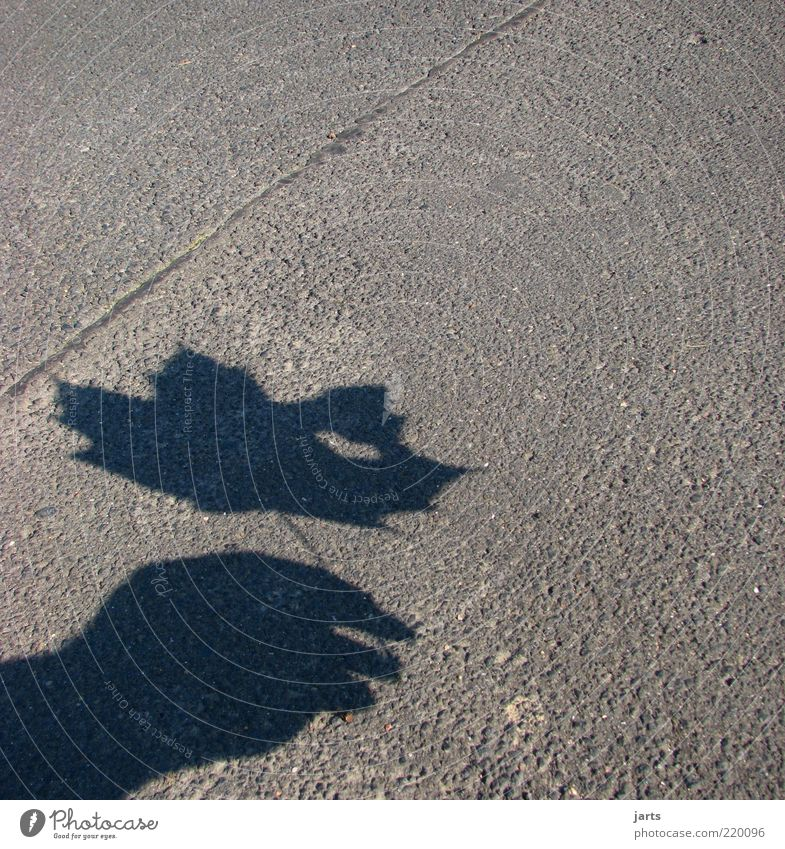 Hand Plant Leaf Autumn Natural Hope Asphalt To hold on Trust Sign Tar Shadow play Human being Heart-shaped