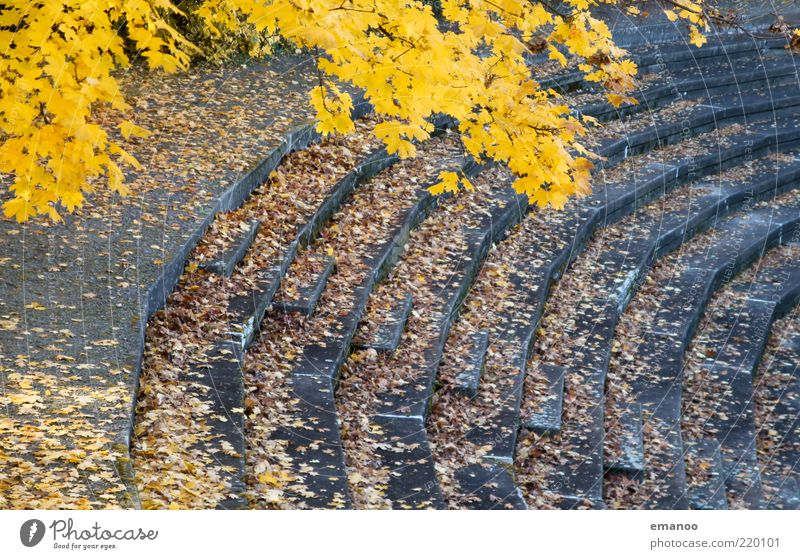 autumn of spectators Sporting Complex Stadium Nature Autumn Climate Tree Leaf Stairs Old Yellow Gray Line Curve Round Sharp-edged Concrete Derelict Empty