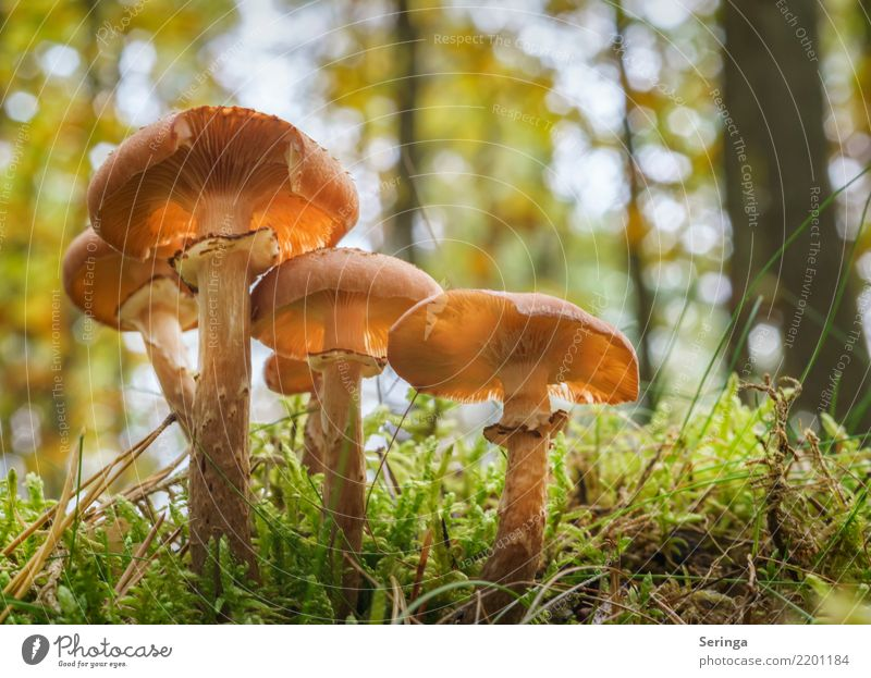 Long-stemmed Nature Plant Animal Autumn Moss Fern Park Forest Eating Growth Healthy mushroom group Mushroom Mushroom cap Mushroom picker Mushroom soup
