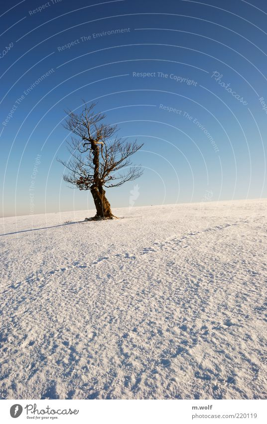 the old beech Freedom Winter Snow Nature Landscape Cloudless sky Beautiful weather Ice Frost Tree Rhön Wood Old Blue Brown White Loneliness Uniqueness Cold