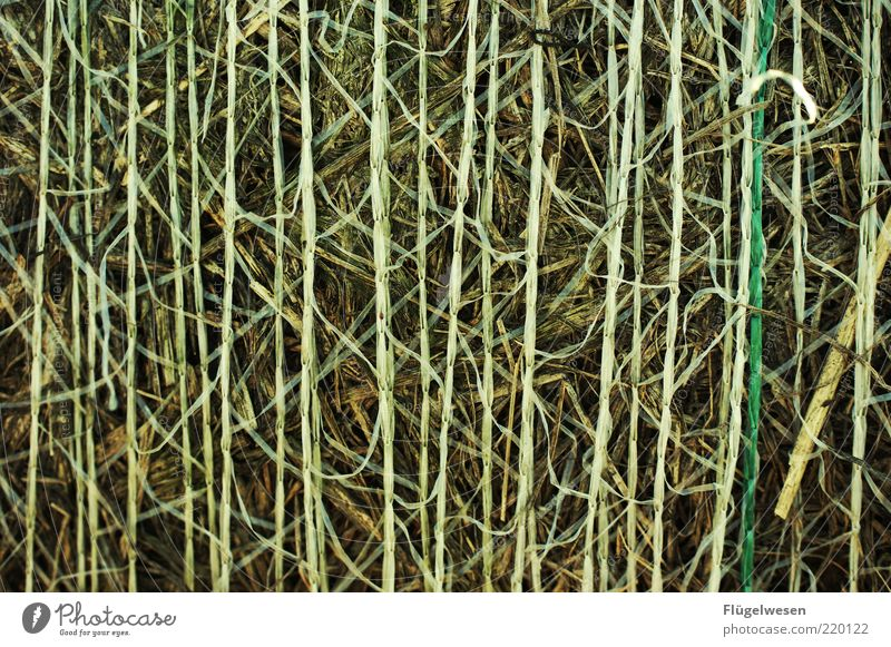 Nature Environment Climate Pure Grain Dry Blade of grass Vertical Shriveled Wheat Straw Hay Copy Space Barley Hop Agriculture