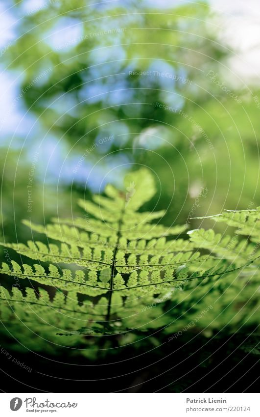 green is the hope Environment Nature Plant Elements Air Fern Leaf Foliage plant Wild plant Breathe Fresh Bright Beautiful Green Blur Structures and shapes