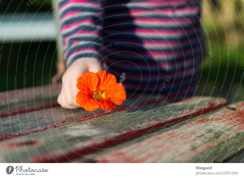 Child Red Girl Blossom Healthy Friendship Infancy Happiness Fantastic Warm-heartedness Gift Transience Friendliness To hold on Serene Trust