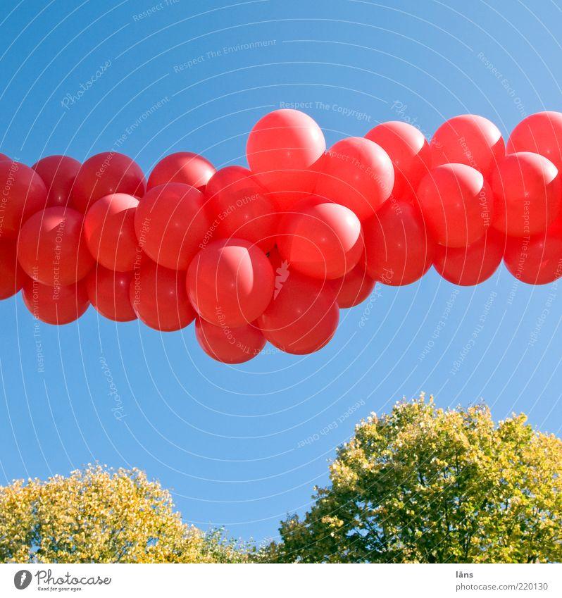 solemn Event Feasts & Celebrations Plant Sky Cloudless sky Autumn Decoration Balloon Line Blue Green Red Emotions Joy Happiness Joie de vivre (Vitality)