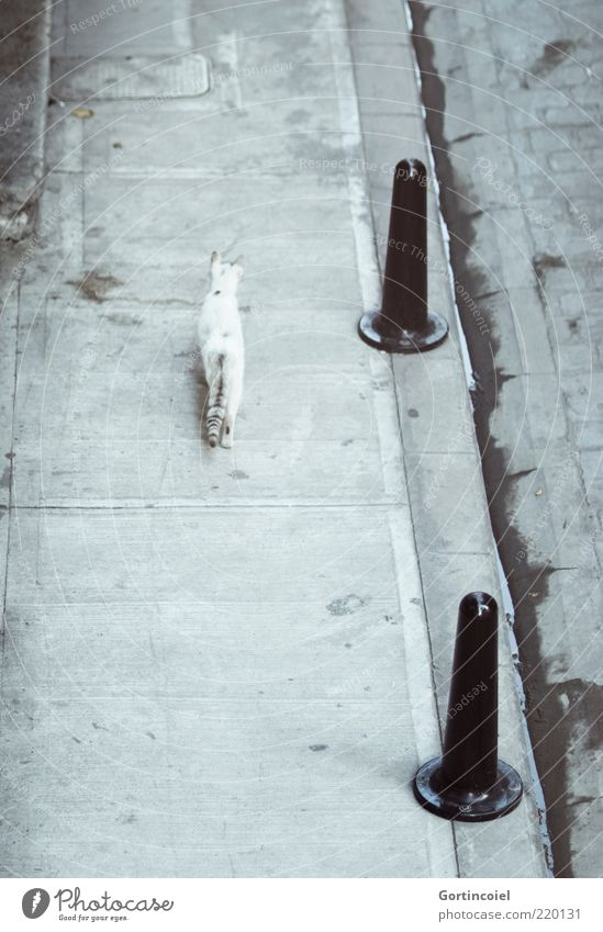 Walking Alone Animal Cat 1 Free Gloomy Gray Sidewalk Loneliness Wild Bollard Rear view Concrete Tails Deserted Free-living Curbside Curbstone Independence