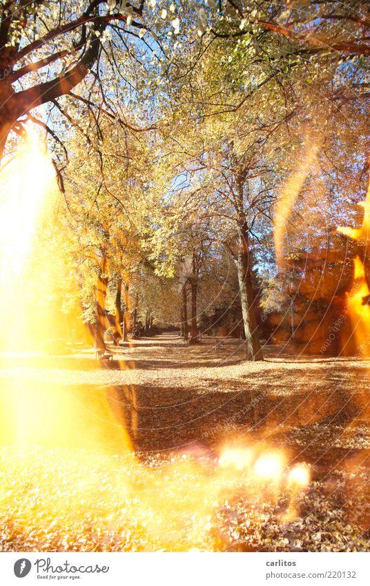 Tree Leaf Autumn Sadness Lanes & trails Park Warmth Brown Blaze Fire Grief Transience Illuminate Burn Footpath Beautiful weather